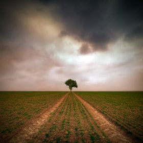 Tree by Piotr Krol (PiotrKrol_Bax)) on 500px.com
