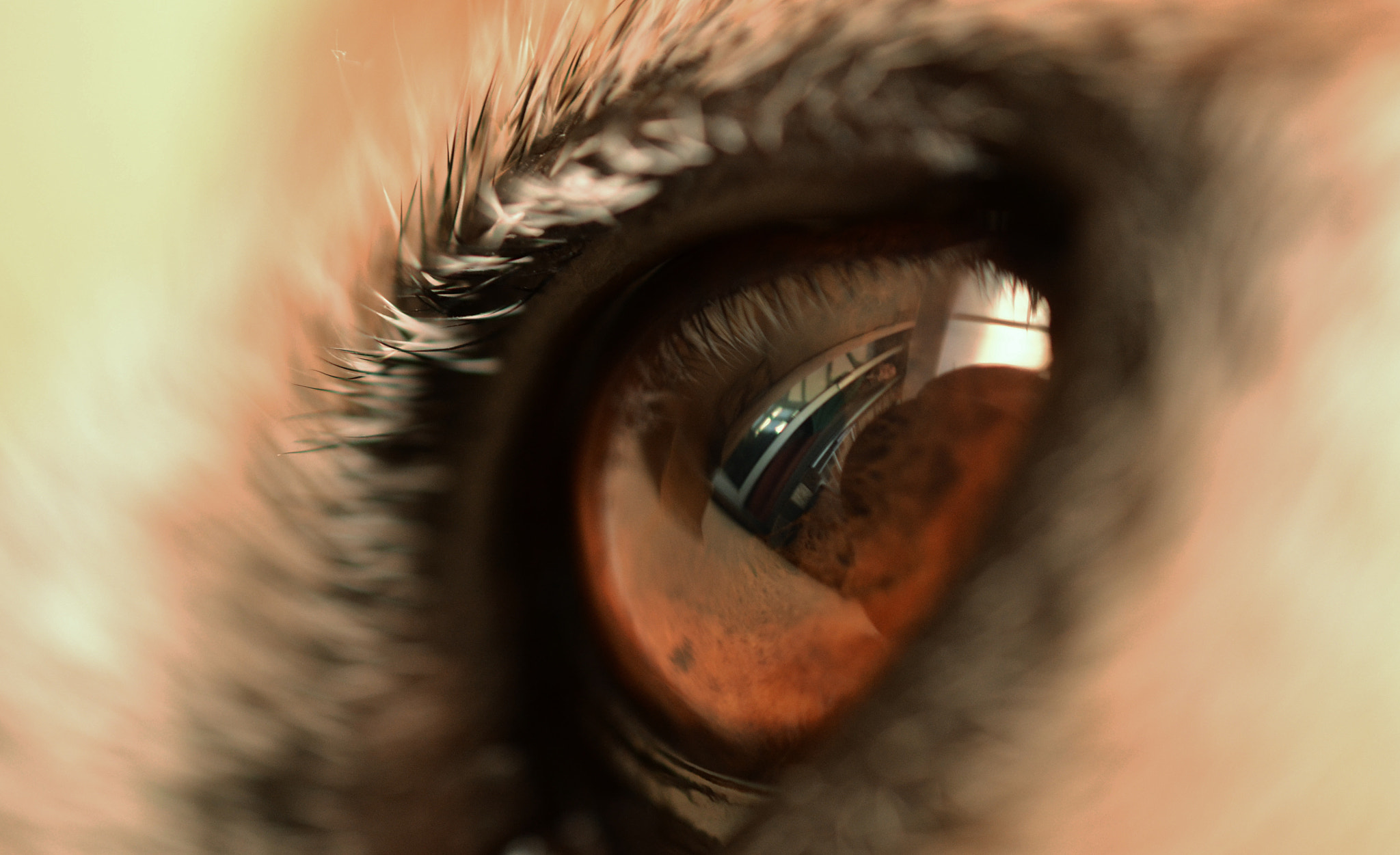 Photograph through your eyes by emily prouse on 500px