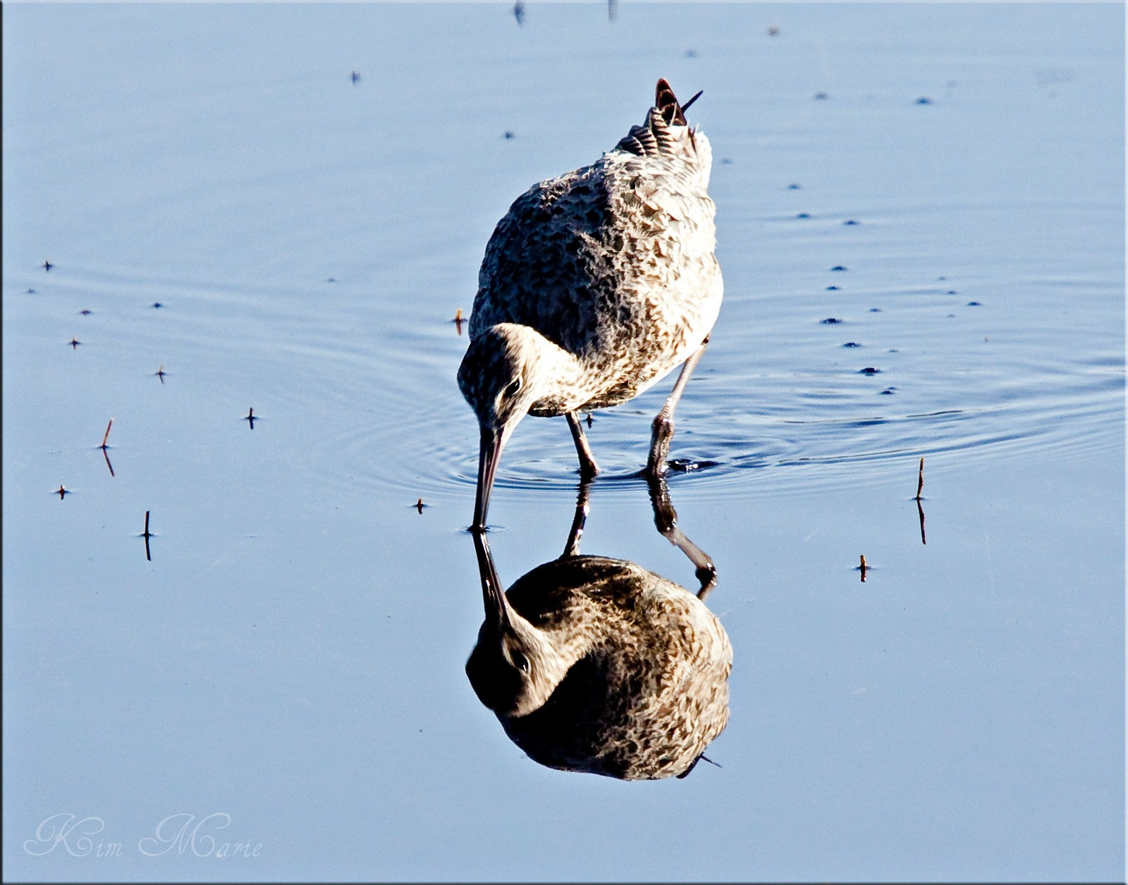 Photograph Reflections by Kim Gagnon on 500px