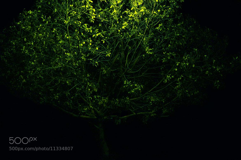 Photograph tree of life  by Abdulla  Rasti on 500px