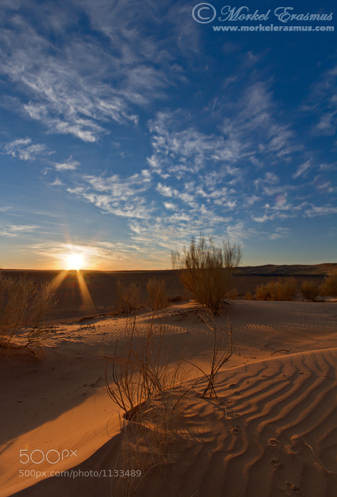 Photograph Kalahari Dunes @ Dawn by Morkel Erasmus on 500px