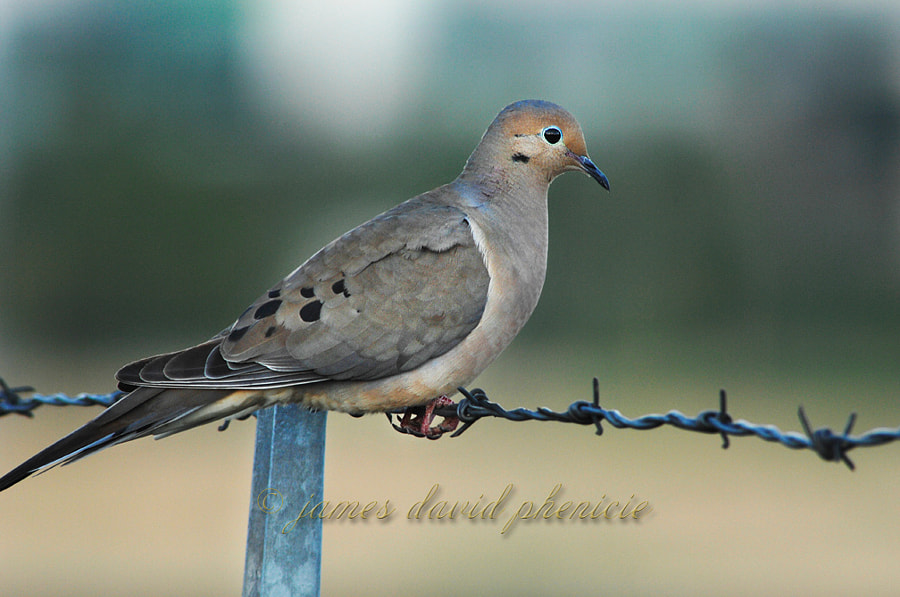 Perching on a Barbed Wire