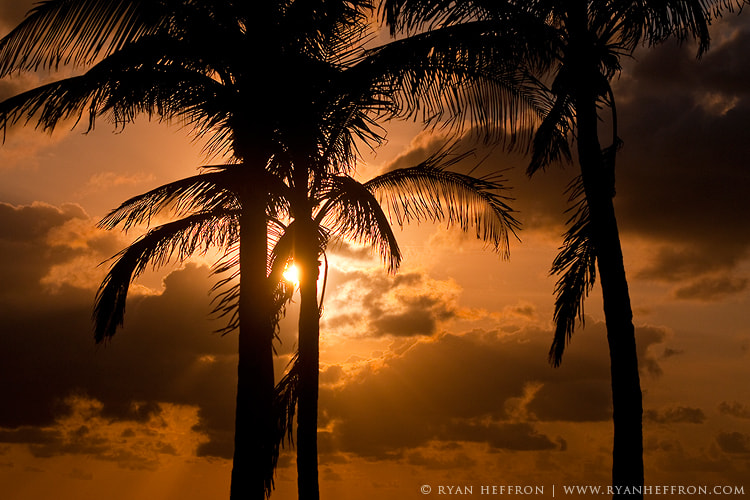 Photograph Golden Palms by Ryan Heffron on 500px