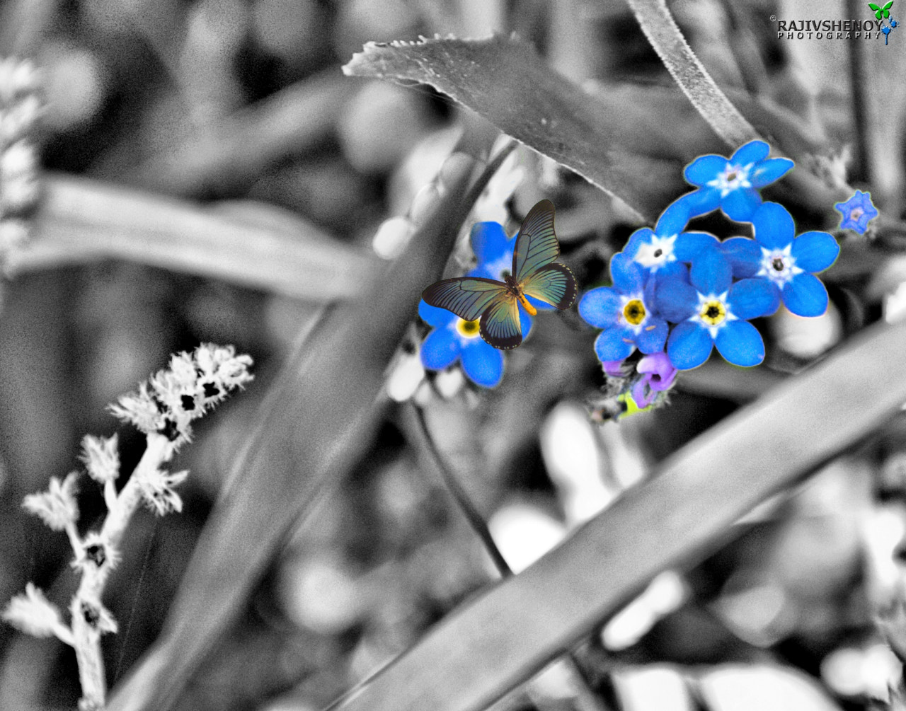 Photograph Blue Flower by Rajiv Shenoy on 500px