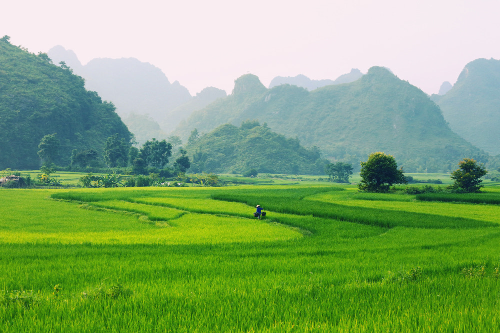 Photograph Green by Viet Hung on 500px