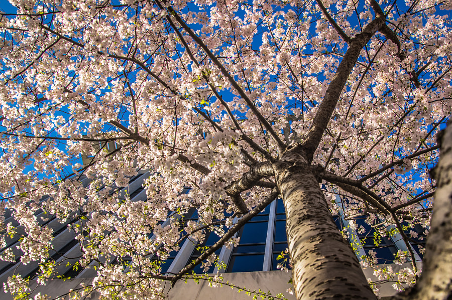 Photograph Cherry or More by Andy Roth on 500px