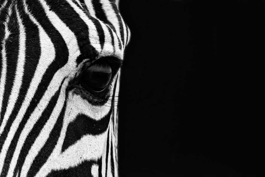 Photograph Zebra Eye by Mario Moreno on 500px