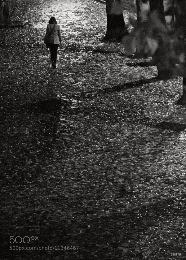 "Sad rainy autumn night..  <a href=""http://nightgrain.tumblr.com/"">Photoblog</a>"