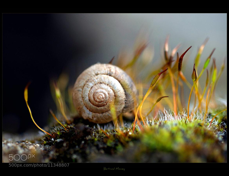 Photograph lichen by 1D110 Bertrand Monney on 500px