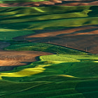 ������, ������: Lacy fields of Palouse