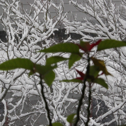 Spring Illusion
