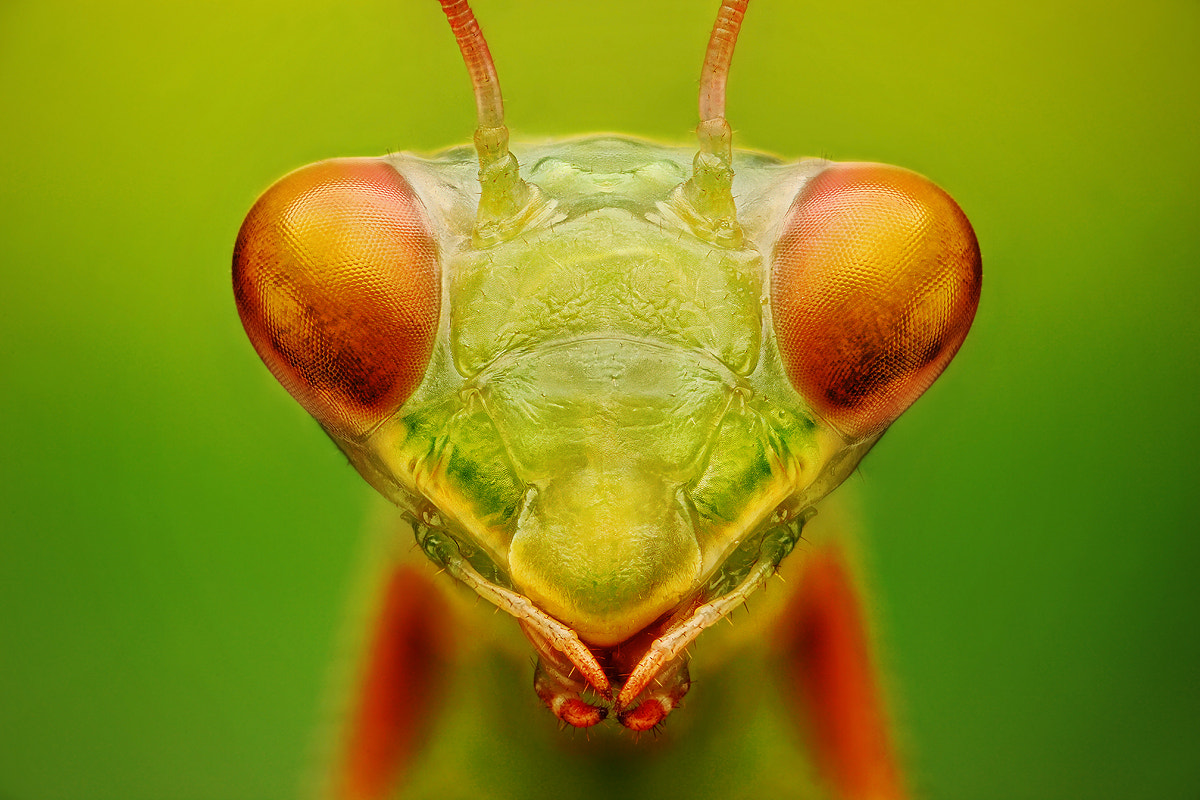 Photograph Mantis by Dusan Beno on 500px