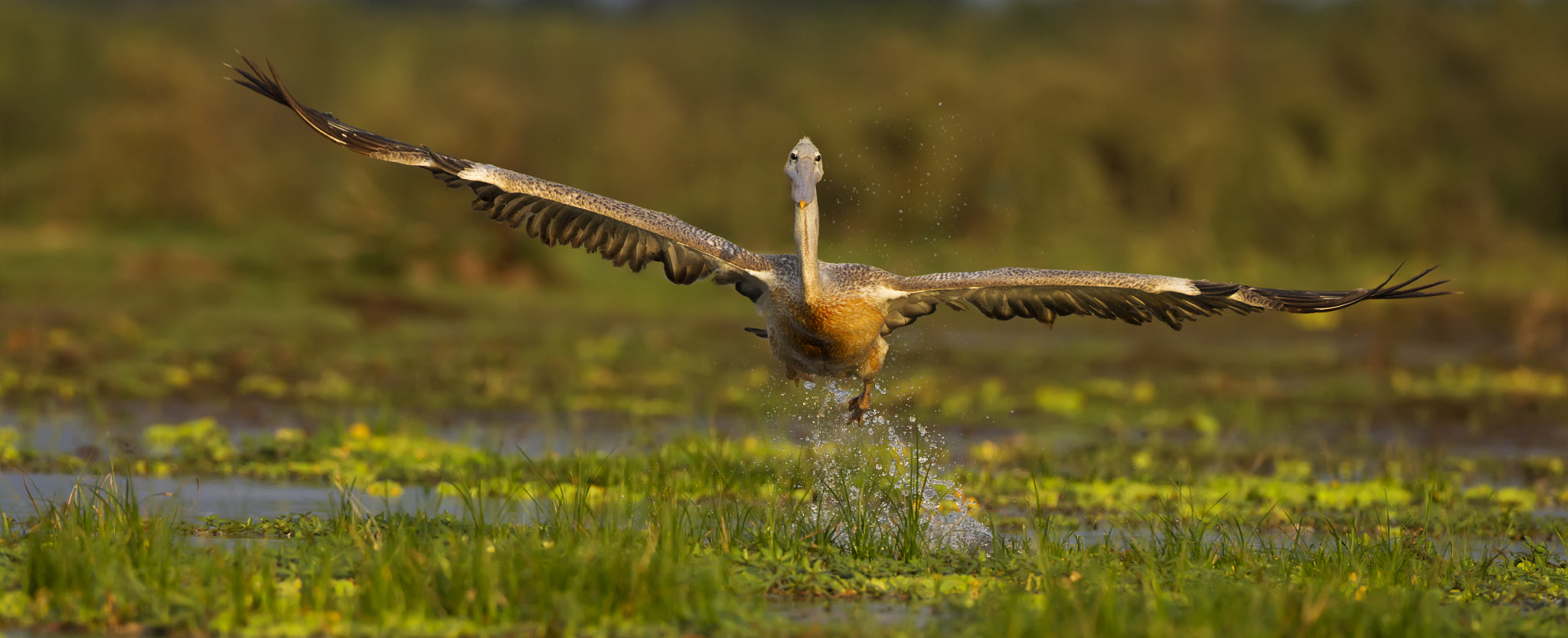 Photograph Take Off by Ken Watkins on 500px