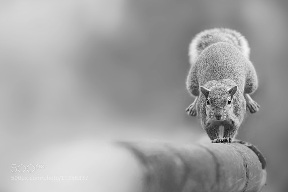 Photograph I run from you by Stefano Ronchi on 500px