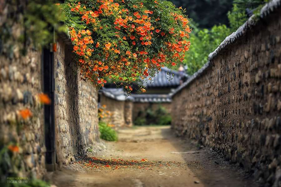 Photograph Old town by Tiger Seo on 500px