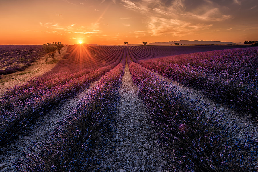 THE TRAY OF FORTUNE by Mr Friks Colors on 500px.com