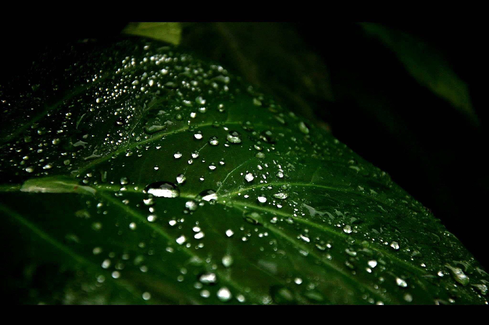 Photograph Every drop feels like heaven- nature's gift to mankind by Preetham Gurumurthy on 500px