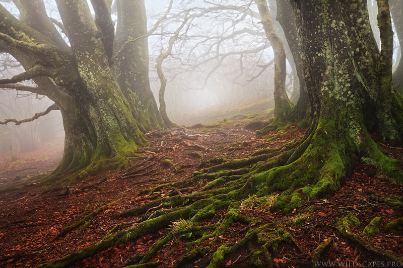 Photograph Like a Tim Burton's Movie by Maxime Courty on 500px
