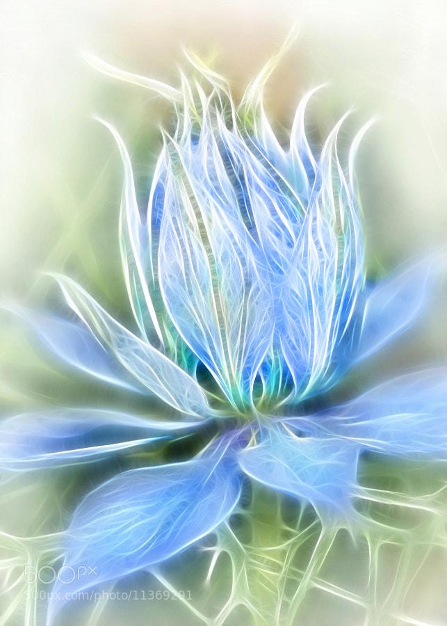 Photograph Soft flower by Jaroslava Melicharová on 500px