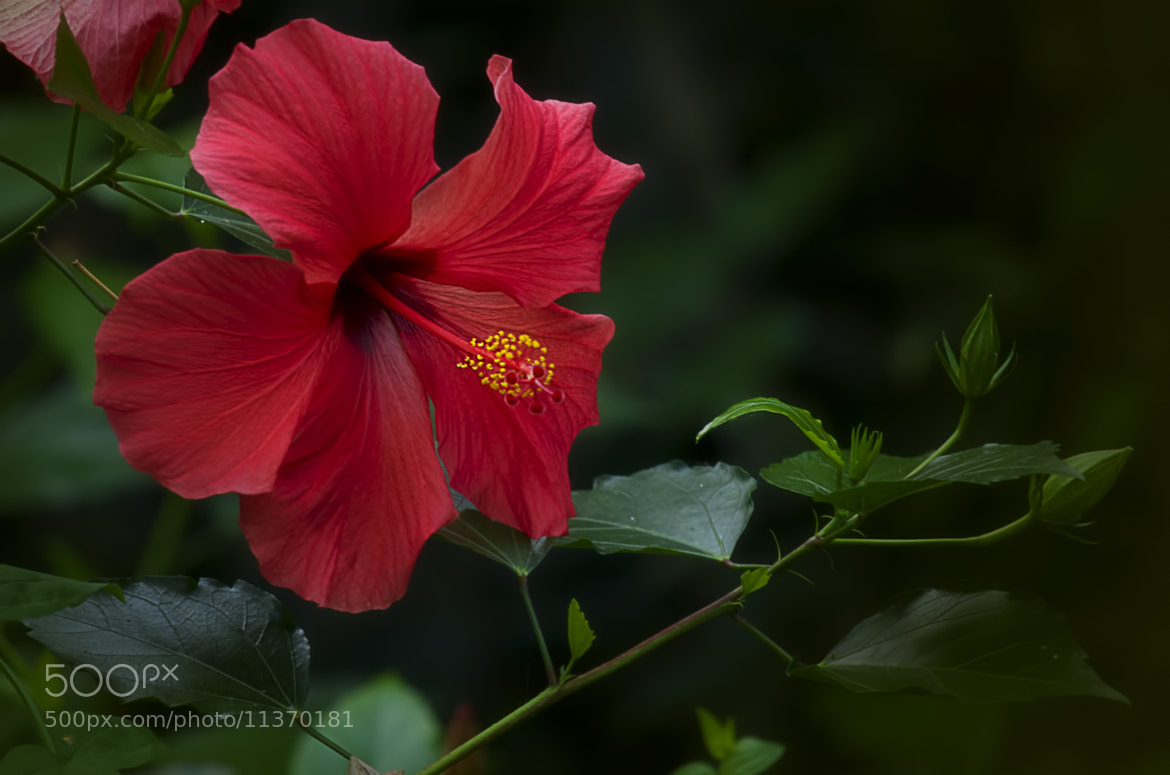 Photograph Tropical by Wim Bolsens on 500px