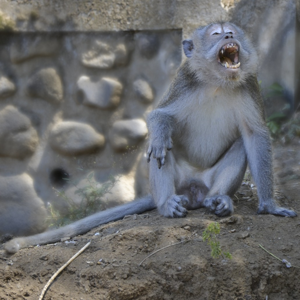 Photograph Upset monkey by Pedro ROUCHES on 500px