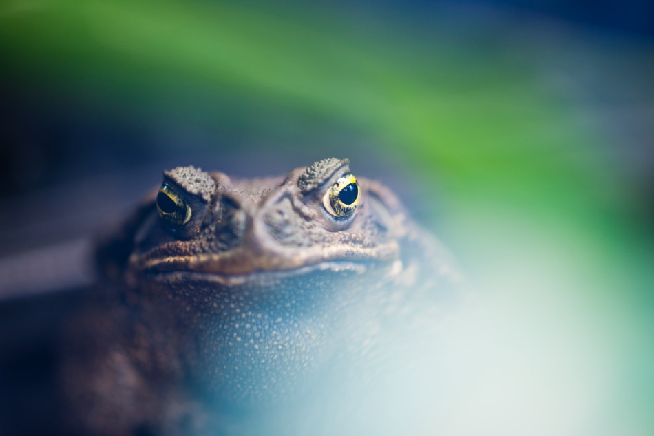 Photograph Frog by Takeshi Marumoto on 500px