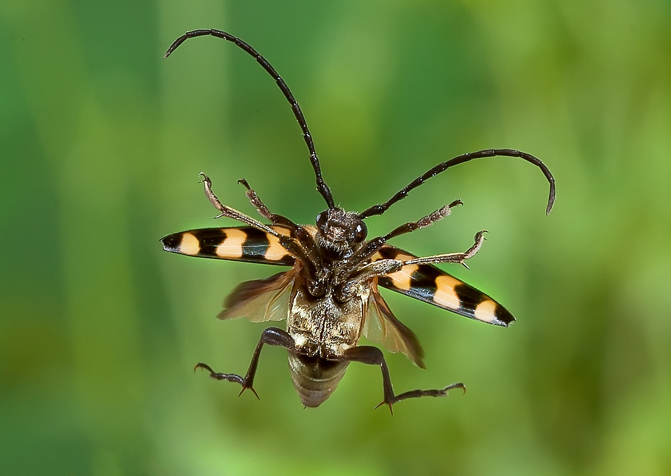 Photograph Longhorn Beetle in Flight by Dale Sutton on 500px