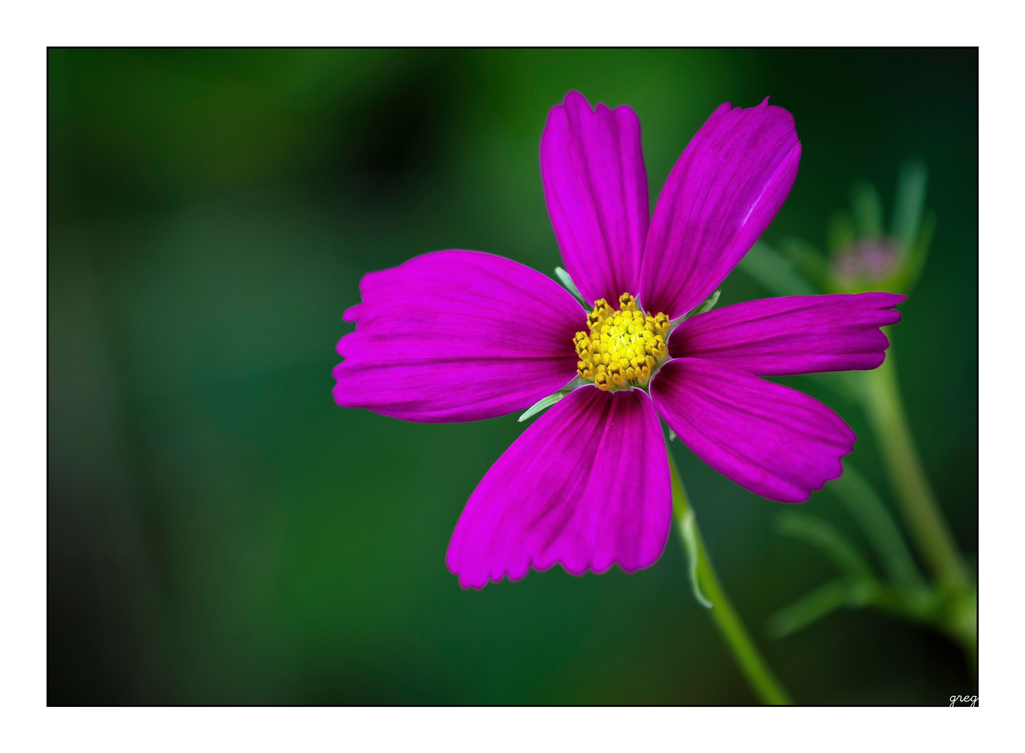 Photograph Purple by NIRO  on 500px