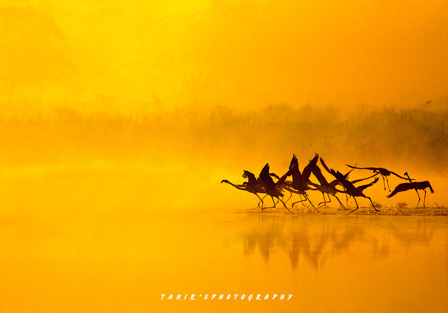 Colors of Nature by Nature images on 500px.com