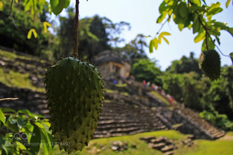 Photograph Palenque by Juan Carlos Díaz on 500px