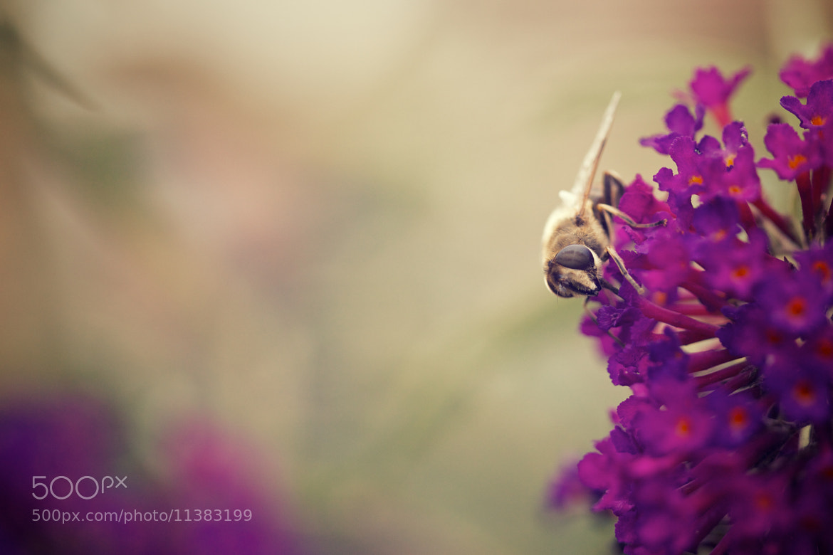 Photograph Balancing Bee by James Johnson on 500px