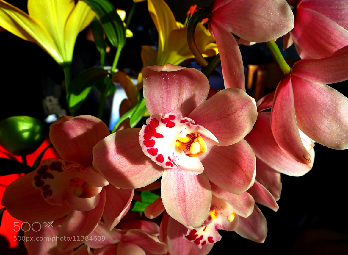 Photograph orchids by Florence Guichard on 500px