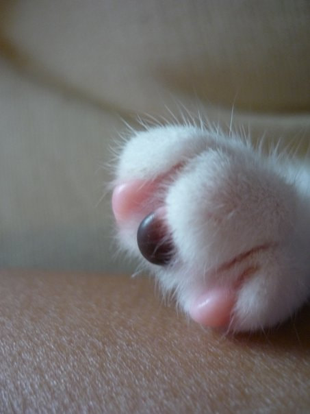 Photograph Paws & Skin by Anna Sch on 500px