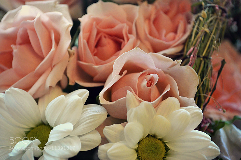 Photograph just flowers by Olga Sinichkina on 500px