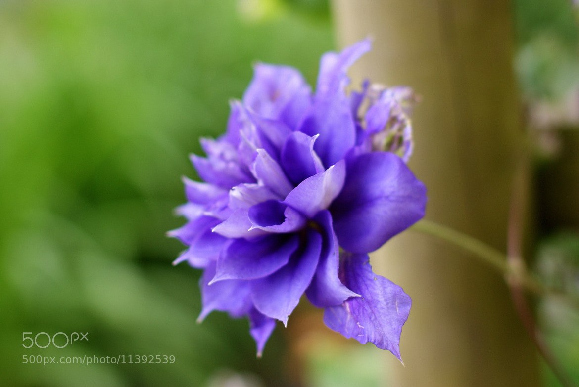 Photograph violet by S  on 500px