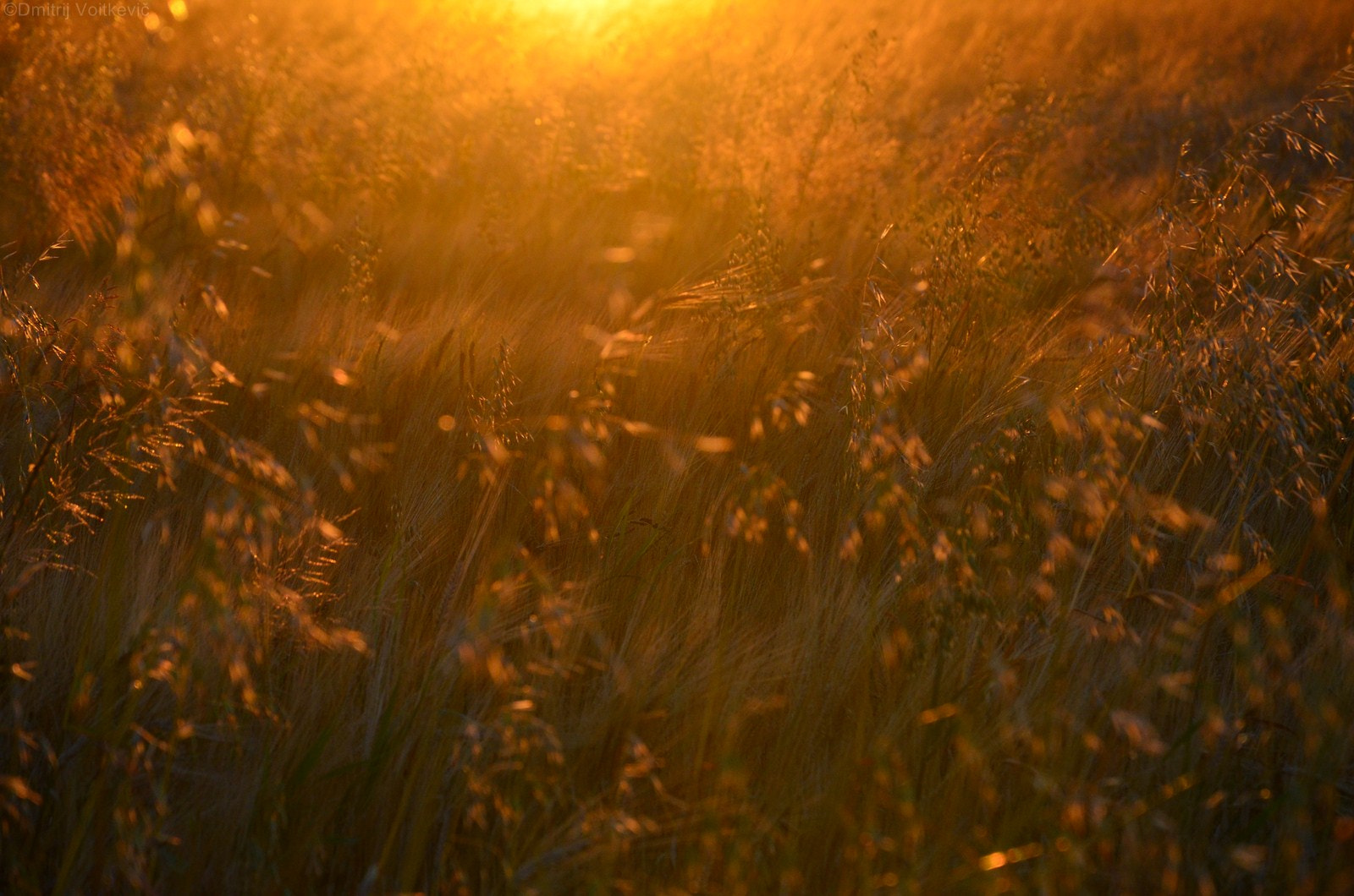 Photograph Evening field by Dmitry Voitkevich on 500px