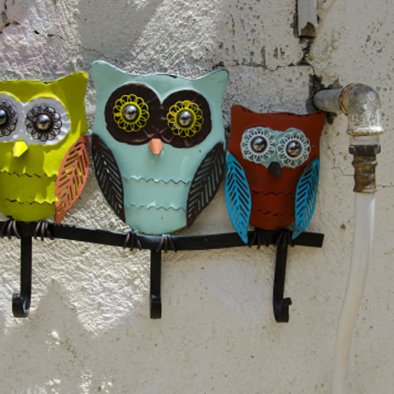 [253] 3 Owls 4 Sale