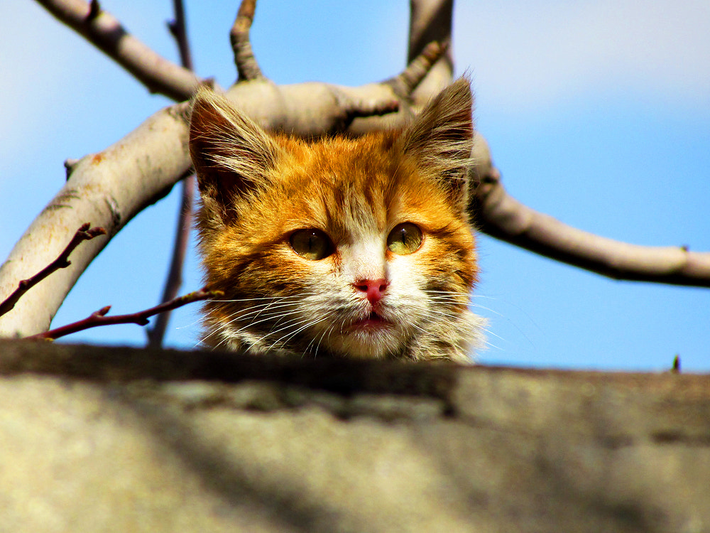 Photograph playful Cat by Amin Afshar on 500px