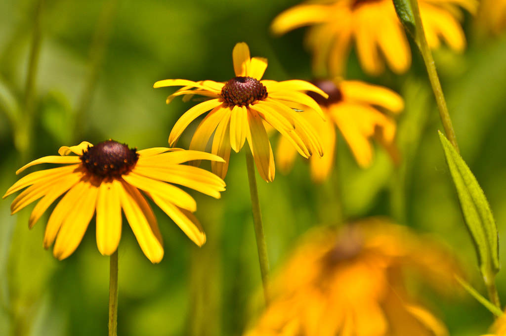 Photograph Block Island Flowers by Spencer Long on 500px