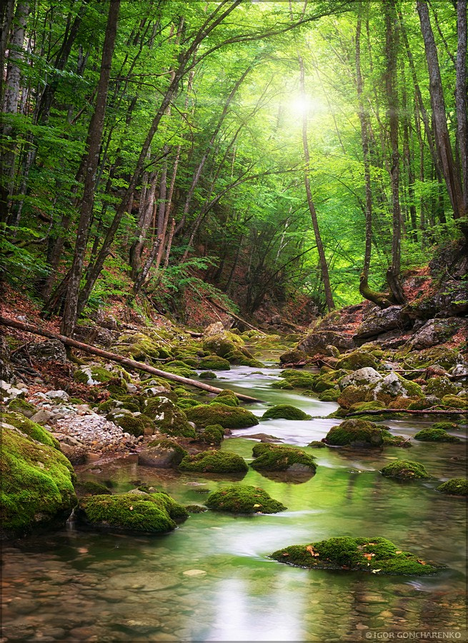 Photograph River deep in mountain forest by Igor  Goncharenko on 500px