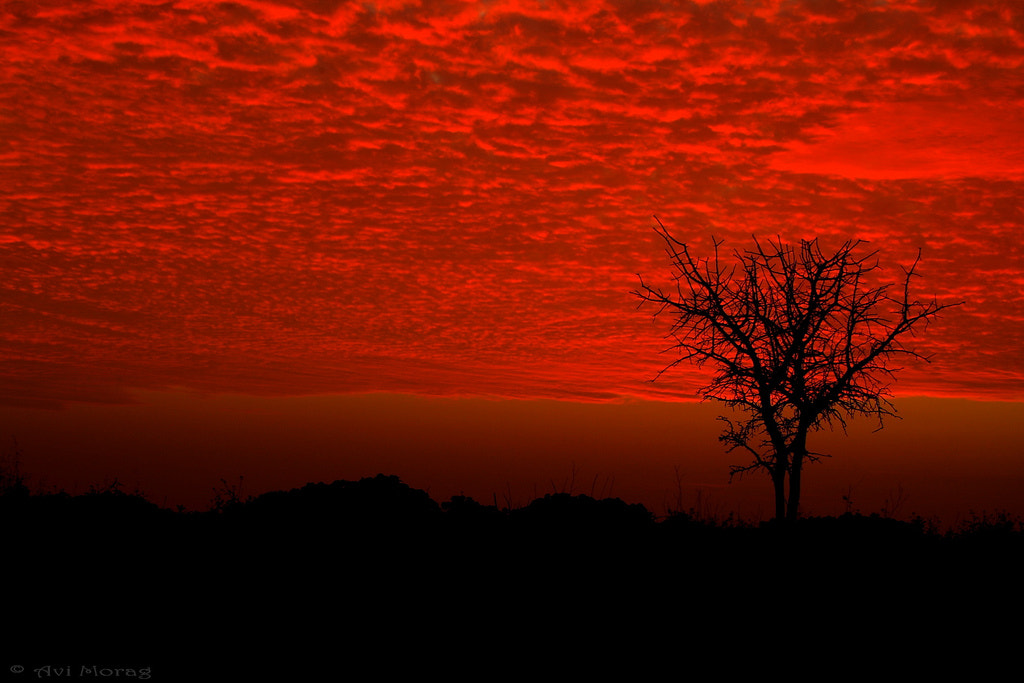 Photograph Tree Silhouette  by Avi Morag on 500px