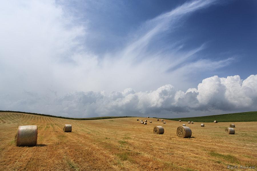Cloudy Fields
