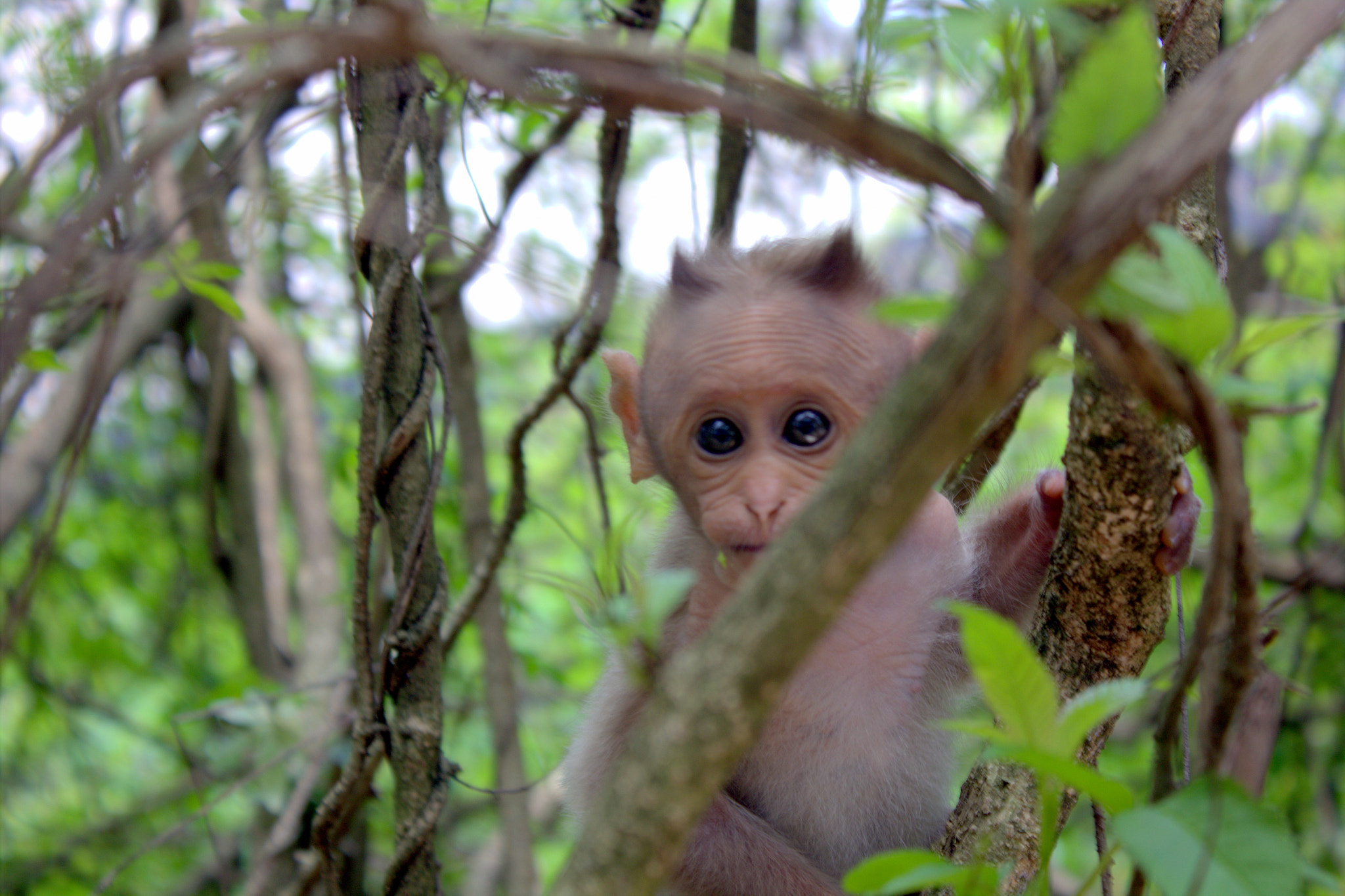 Photograph Infant Monkey by Karthic K on 500px