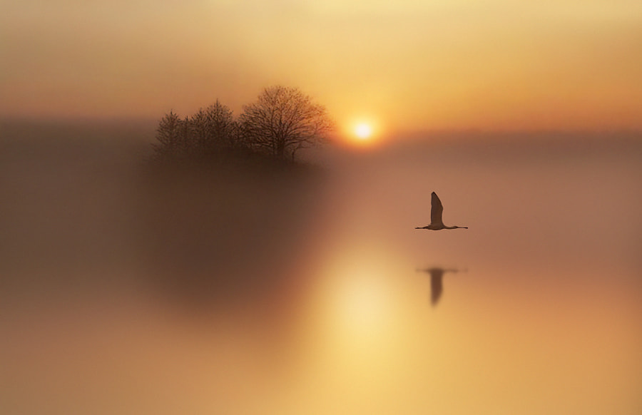 Photograph Peace by Antonio Amati on 500px