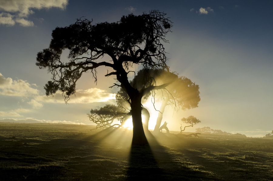 28 Ethereal Images of Light Rays that Glow