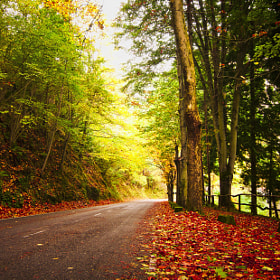 Autumn road by MMB Fotografía  (mmbfotografia)) on 500px.com