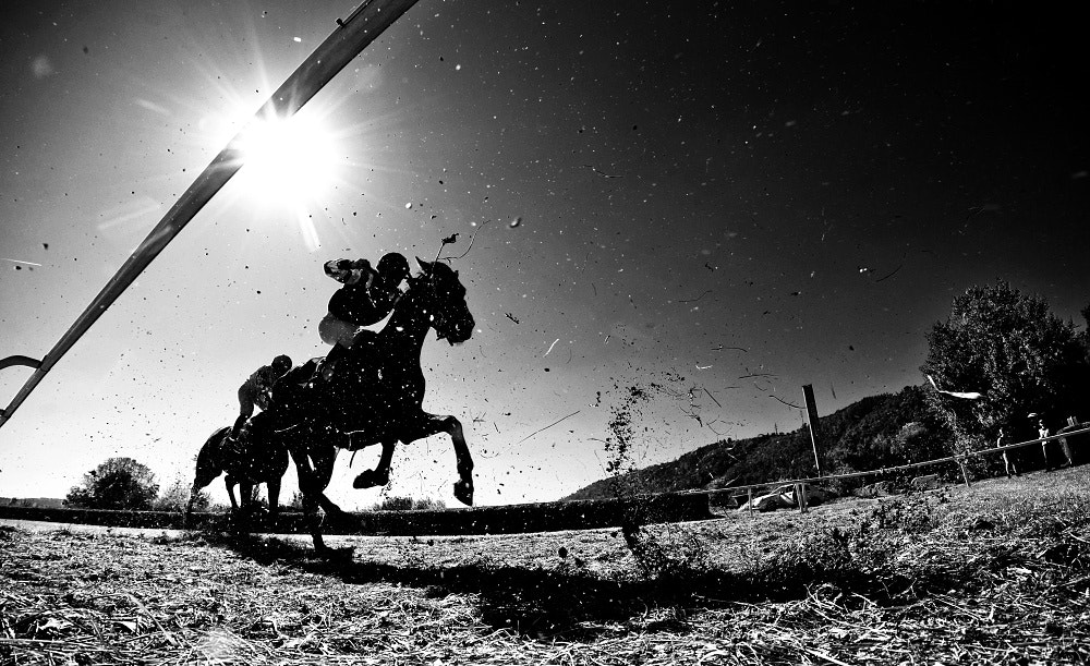 Photograph horse racing by Martin Kozák on 500px