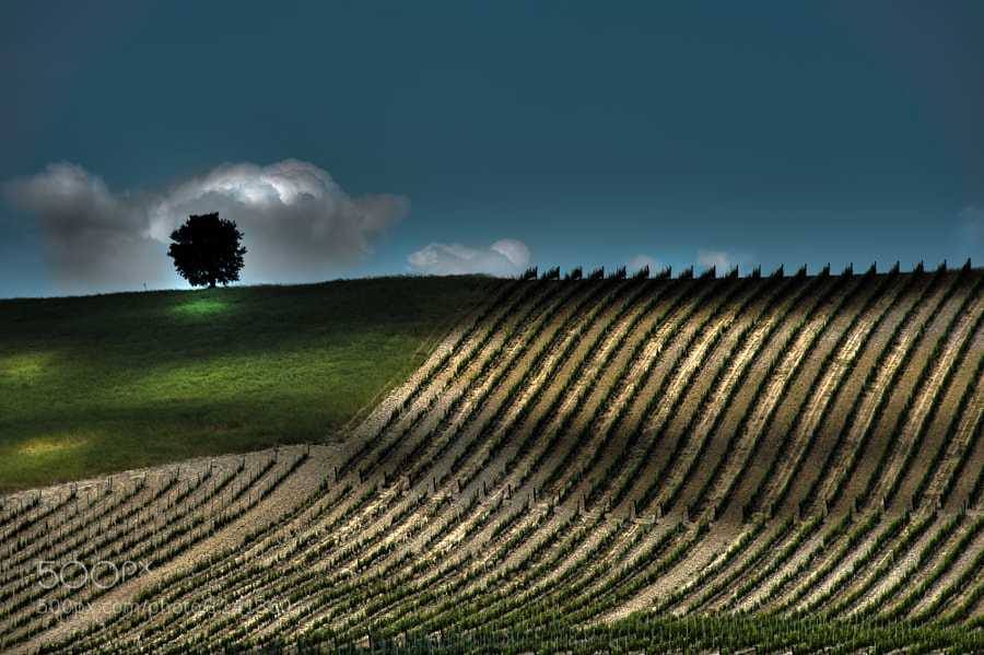Photograph Lone Tree, Tuscany by Satheesh Nair on 500px