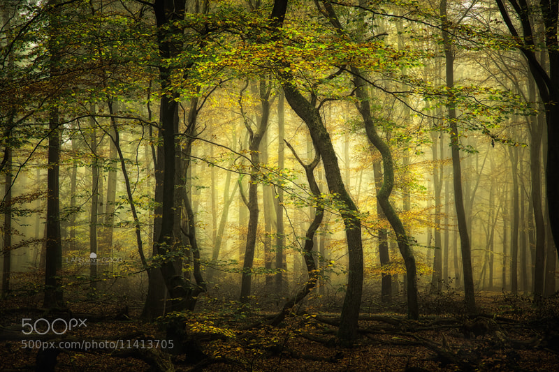 Photograph colors of the wood rld by Lars van de Goor on 500px