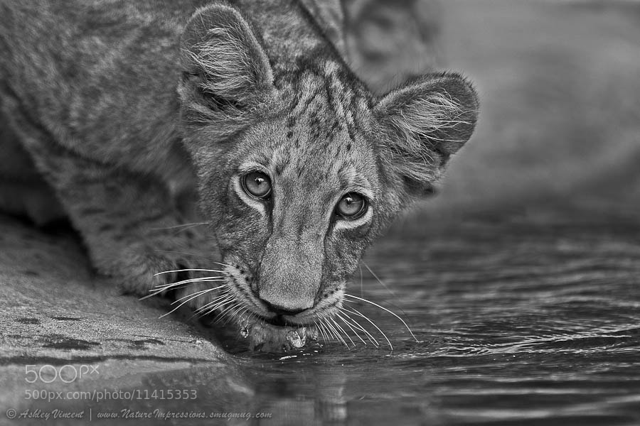 Photograph Watching You Watching Me by Ashley Vincent on 500px